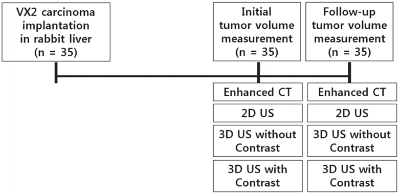 The Feasibility Study of Contrast-enhanced Ultrasound Using